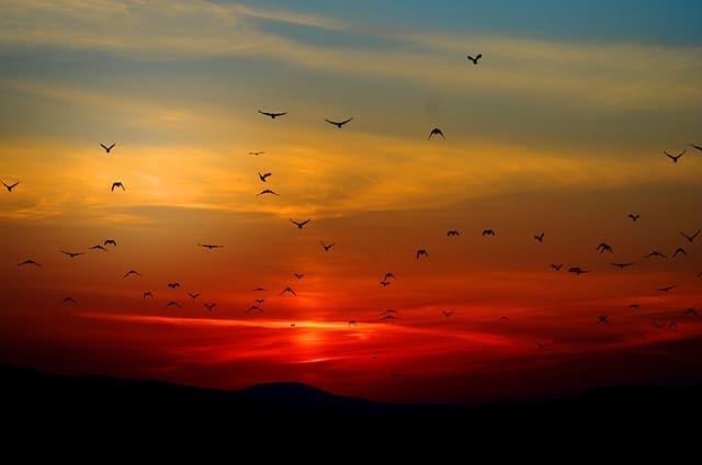 oiseaux et magnétisme