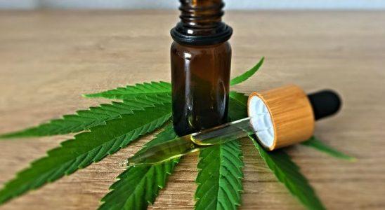 L'huile de CBD doit son goût de terre et de noisette au plant de cannabis