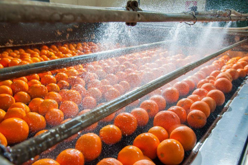 Machine qui rince les oranges